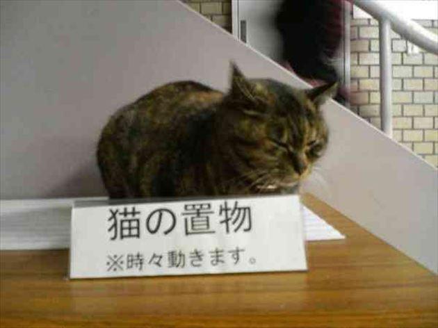 猫の置き場