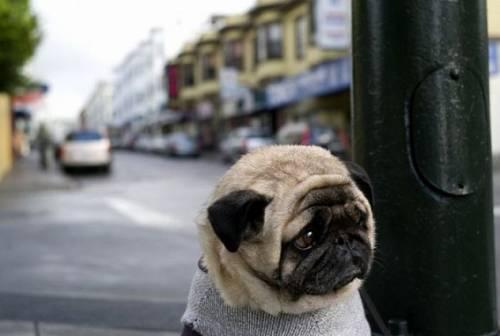 犬がちょっと寂しそうな顔をしている写真