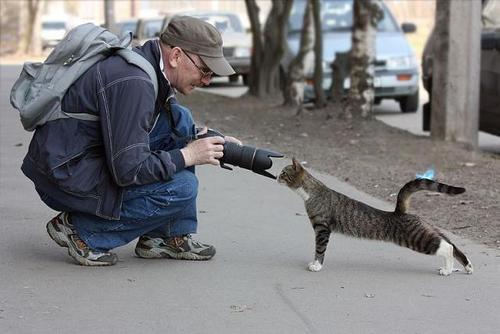 すごいポーズを決める動物たちの写真