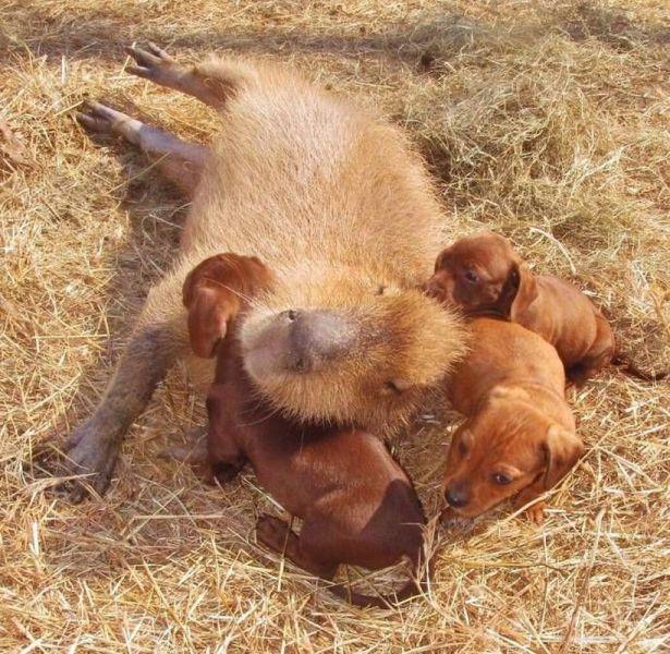 動物たちの可愛すぎる画像