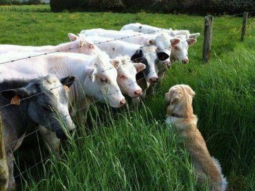 動物たちが並んだらこんなに可愛くなった写真