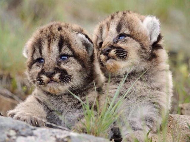 本当に可愛い表情をした動物たちの写真