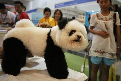 「パンダになりたかった犬たち」の写真