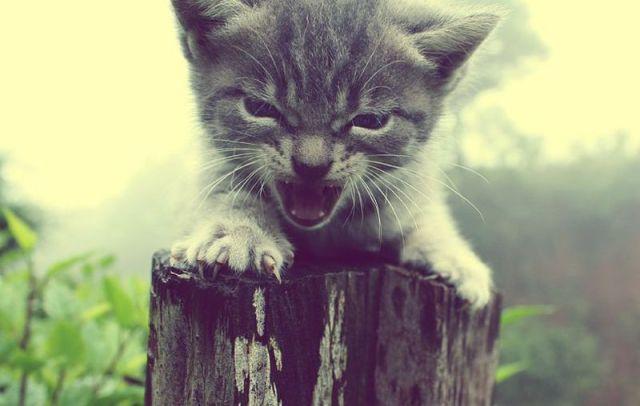 可愛い動物の画像が沢山集まったよ!