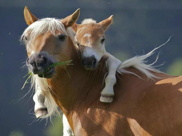 羨ましいくらいに仲のいい動物画像