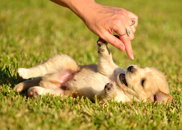 幸せそうな犬の笑顔