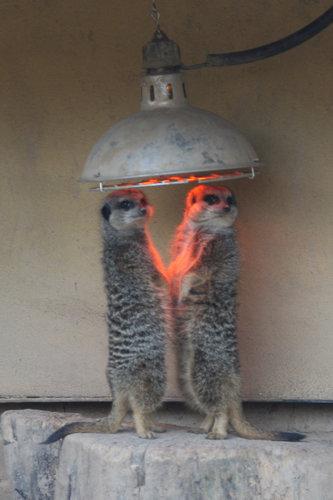可愛い動物たちが立ち上がっていてワロタwww写真