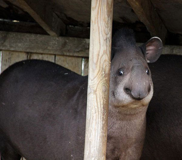 マジキチフェイスな動物たちの写真