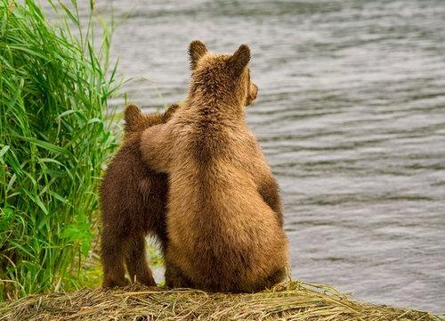感情表現が豊かな自然の中の熊たち