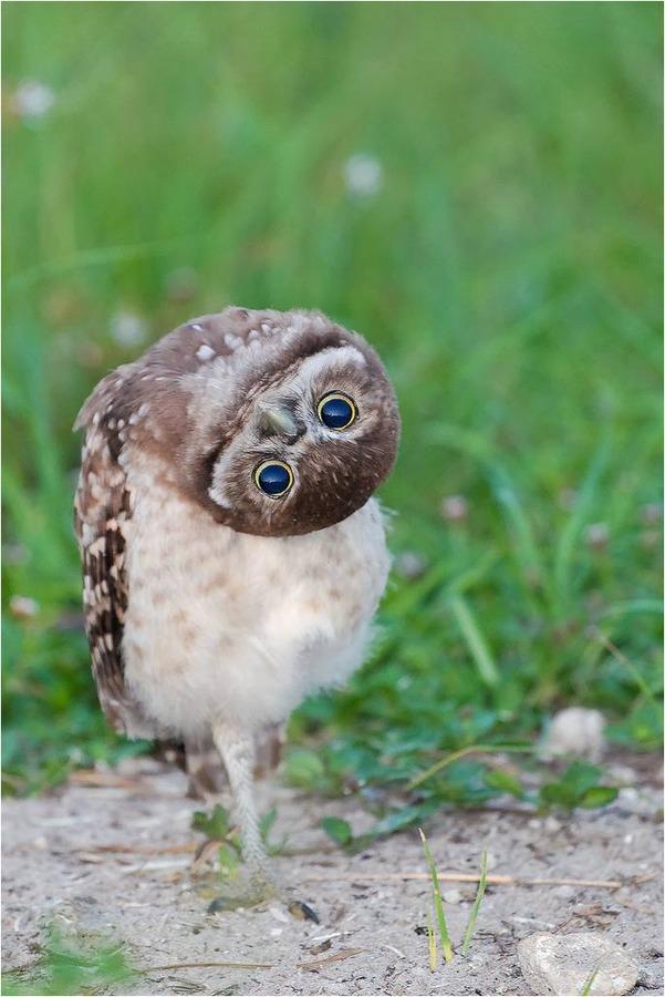 可愛いフクロウさんの写真