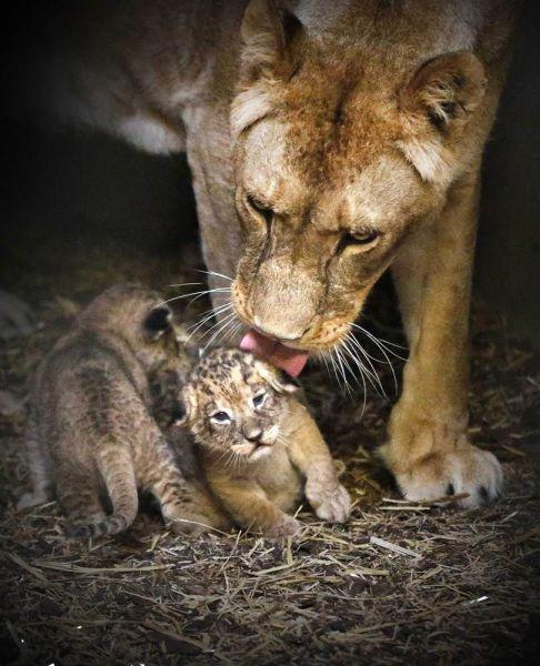 キュン死しちゃいそうな可愛い動物の写真