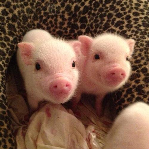 本当にキュンとする!動物の赤ちゃんたちの写真