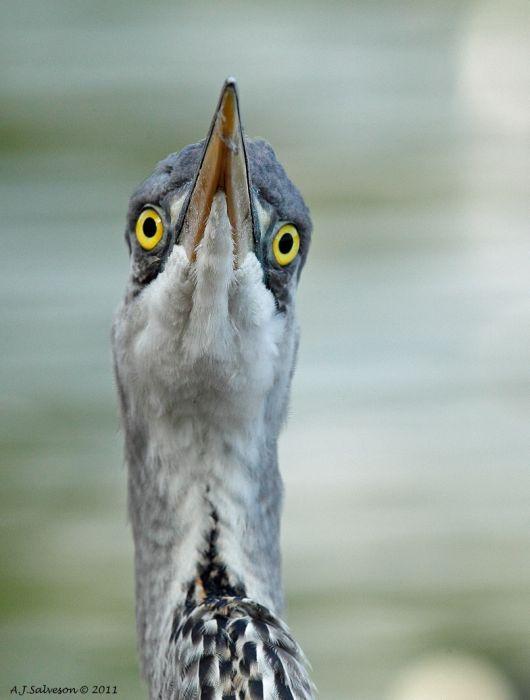 とても美しい鳥の写真
