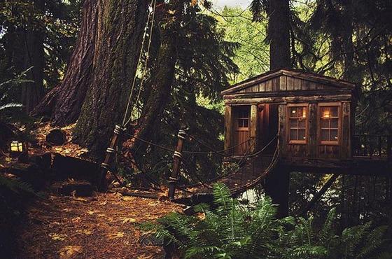 これが男のロマンと思える森の中の建築写真
