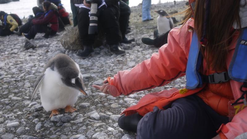 南極にいるペンギンが人懐っこすぎワロタ写真