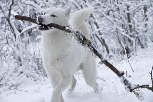 寒さも平気だよ!雪で遊ぶ可愛い動物たちの画像