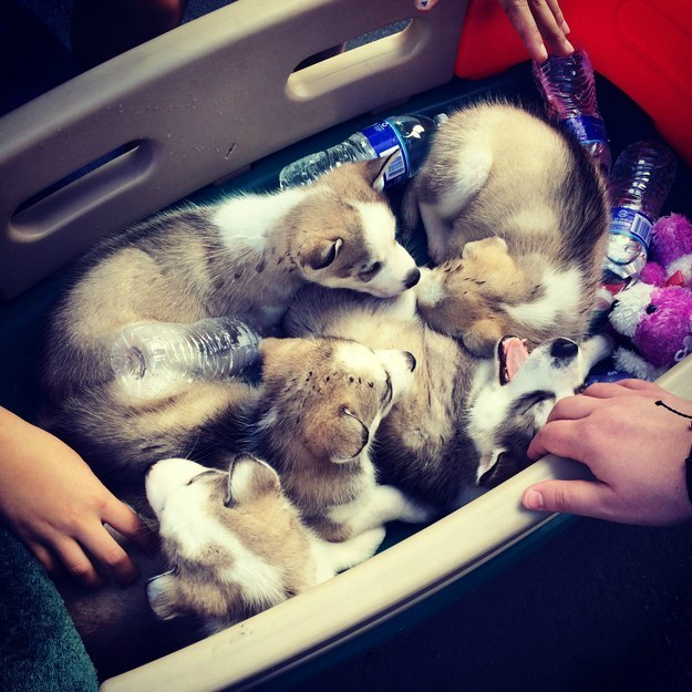 子犬のいっぱい詰まった夢のあるいれもの