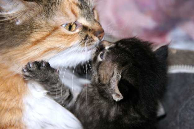 可愛い動物たちが仲良くキスしている写真