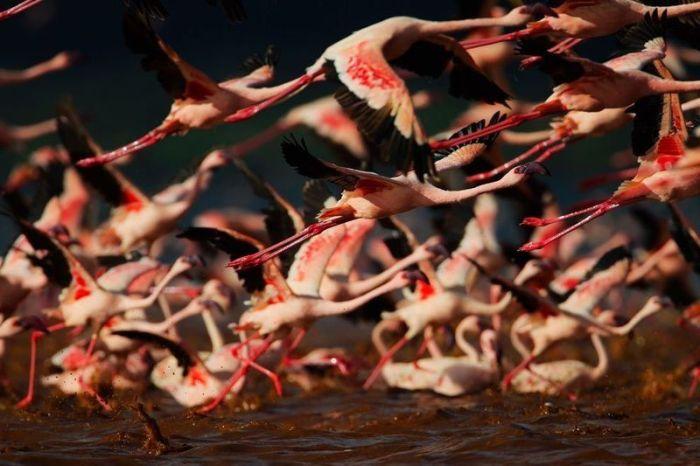 フラミンゴが大群すぎてワロタwww写真