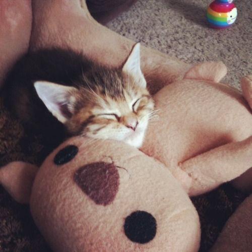 可愛い動物とぬいぐるみのコラボが本当に可愛すぎてやばい写真