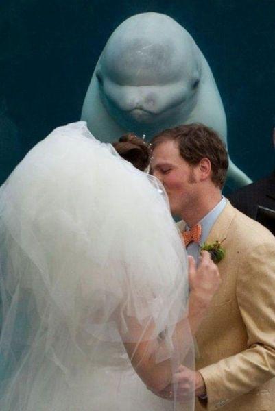 シロイルカの人懐っこさが可愛すぎる写真