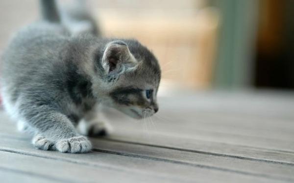 あまりの可愛さに驚くかわいい子猫の画像