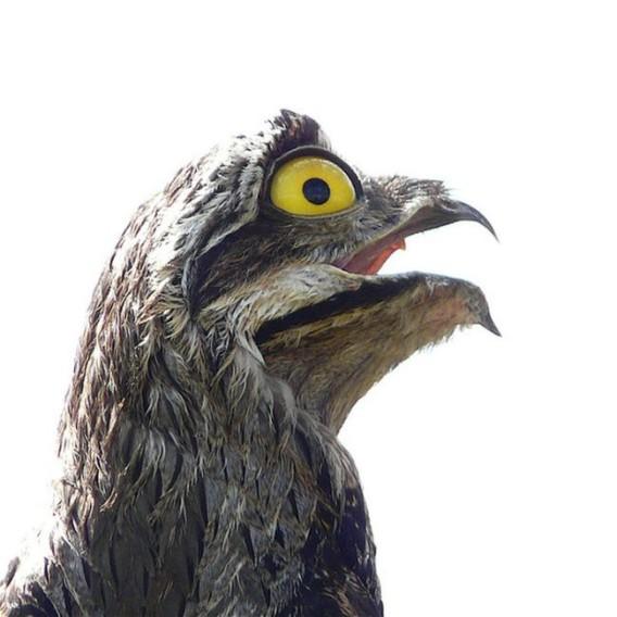 七色の顔を持つ猛禽