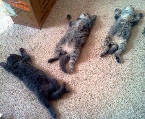 ぐっすり眠る動物たちの癒される写真