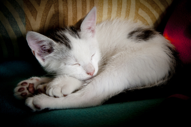 見るとやる気がなくなっていく眠る猫の画像