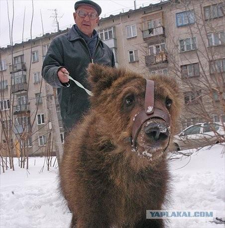 熊を散歩させるロシアの日常風景がヤバすぎる写真