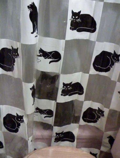 猫や犬の視線を感じる画像