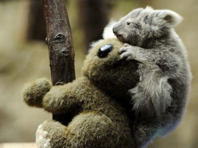 今日も可愛い動物たちの写真