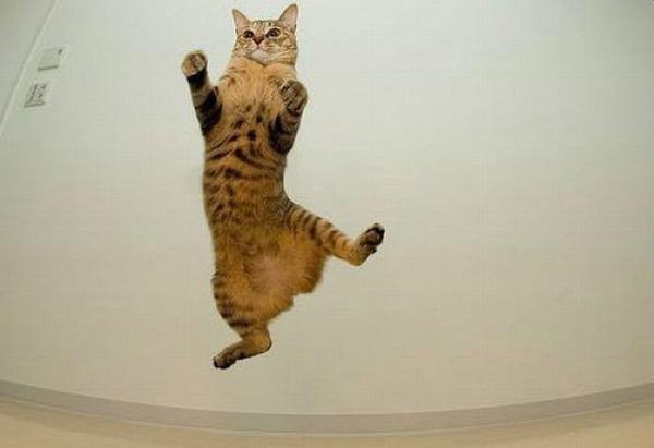 空中を飛行する可愛い猫たちの写真