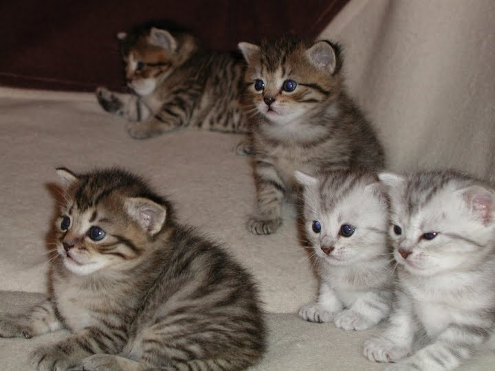 本当に可愛い猫の写真