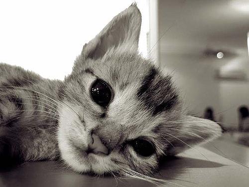 可愛すぎる猫たちの写真