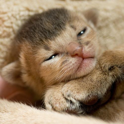 保存したくなる子猫の可愛すぎる写真