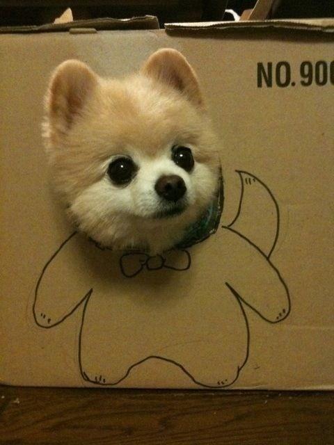 見ているだけで笑える動物のオモシロ画像