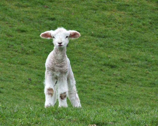 春になって動物の可愛い赤ちゃんが喜ぶ写真