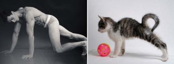 どっちが好き?同じようなポーズのイケメンと猫の比較画像