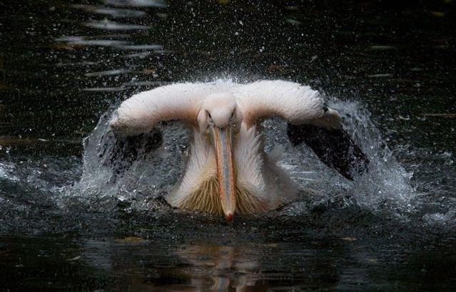 無茶苦茶かわいい動物たちに癒される写真