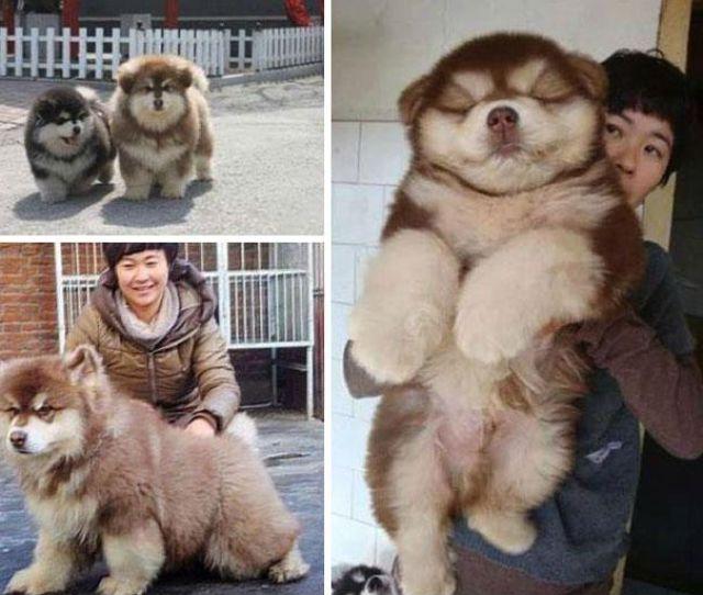 愛嬌ありすぎるミックス犬の写真