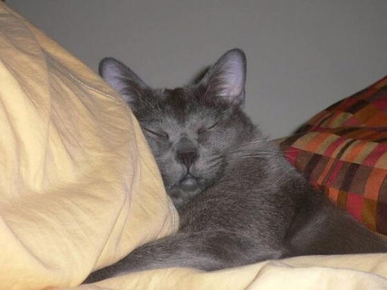 可愛すぎる動物たちが眠そうな写真
