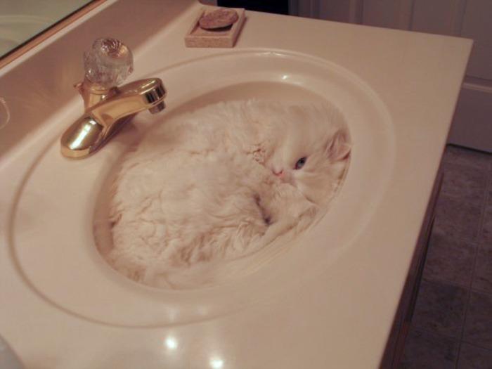 まるで液体のようなネコの写真