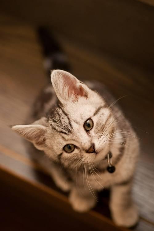 猫につられて首を傾けたら負け!