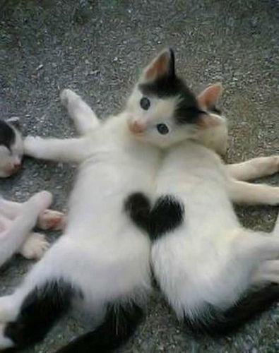 幸福を呼ぶハートマークの可愛い猫や犬の画像