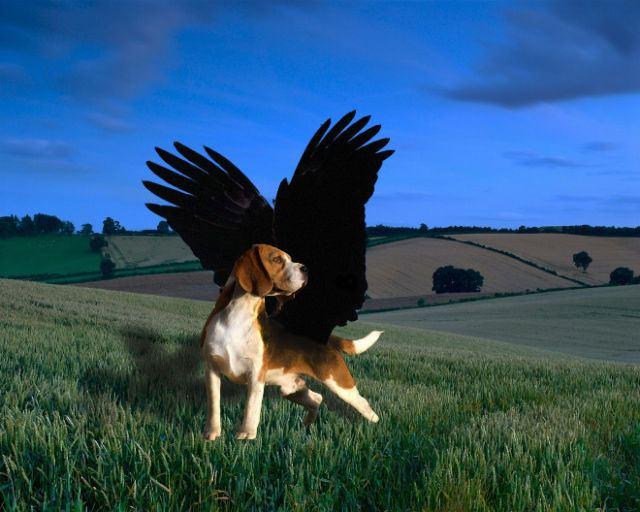 犬と鳥を混ぜるとコレジャナイ感が半端ないことが判明した写真