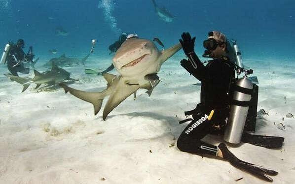 動物たちの「ハイタッチ」が可愛すぎる写真