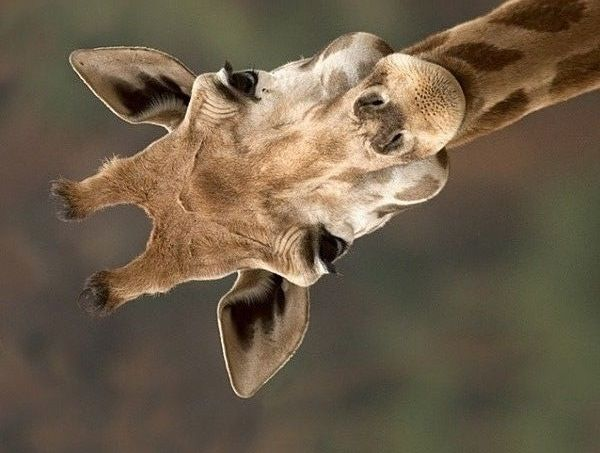 何だか笑える良い表情をした動物の画像