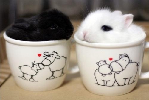 そのまま飲み干したくなるカップ入り動物の写真