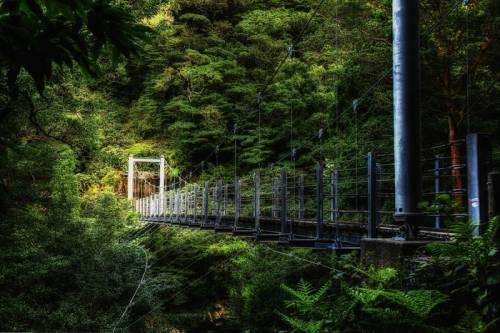 屋久島の神秘的自然が美しすぎる写真
